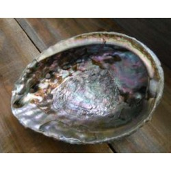Abalone Shell Bowl - Extra Large All Wicca Wiccan Altar Supplies, Books, Jewelry, Statues