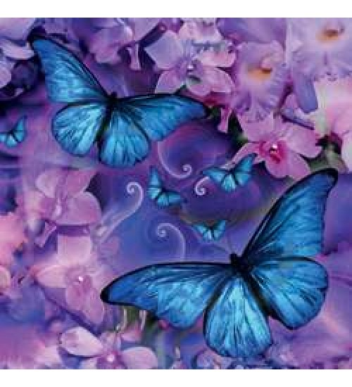 Butterfly Greeting Card with CD at All Wicca Store Magickal Supplies, Wiccan Supplies, Wicca Books, Pagan Jewelry, Altar Statues