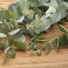 Eucalyptus Essential Oil at All Wicca Store Magickal Supplies, Wiccan Supplies, Wicca Books, Pagan Jewelry, Altar Statues
