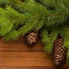 Pine Oil at All Wicca Store Magickal Supplies, Wiccan Supplies, Wicca Books, Pagan Jewelry, Altar Statues