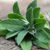 Sage Oil at All Wicca Store Magickal Supplies, Wiccan Supplies, Wicca Books, Pagan Jewelry, Altar Statues