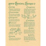9 Healing Herbs Parchment Poster