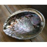 Abalone Shell Bowl - Extra Large