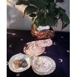 Shell Trio Dish with Silver Rims